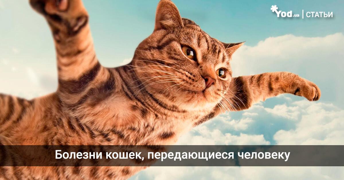 домашние кошачьи паразиты